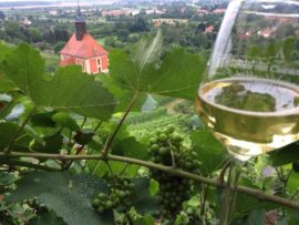 Imagefilm Weinanbaugebiet Sachsen_16