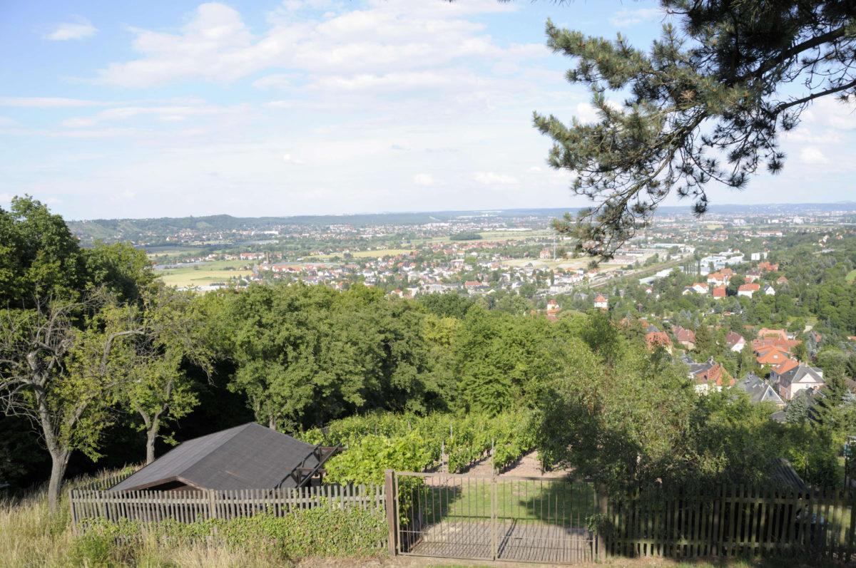 MM_2012-06-23_09798_Weinwanderung_C